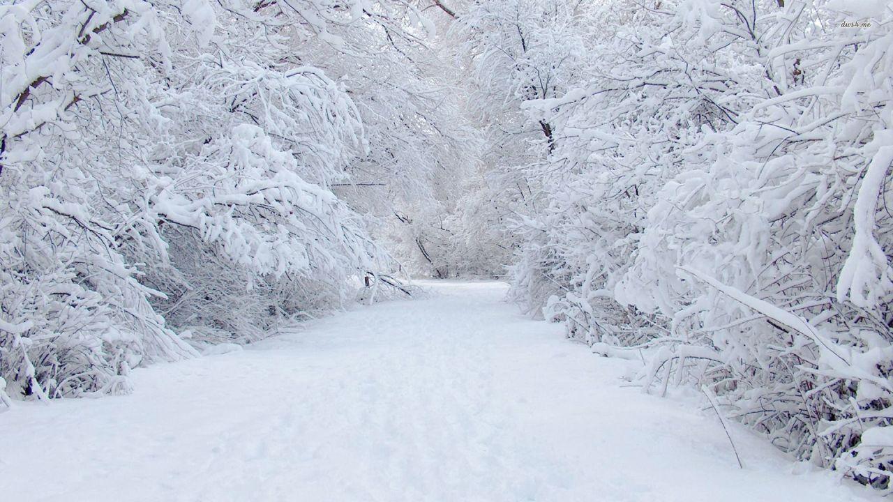Snowbodies
